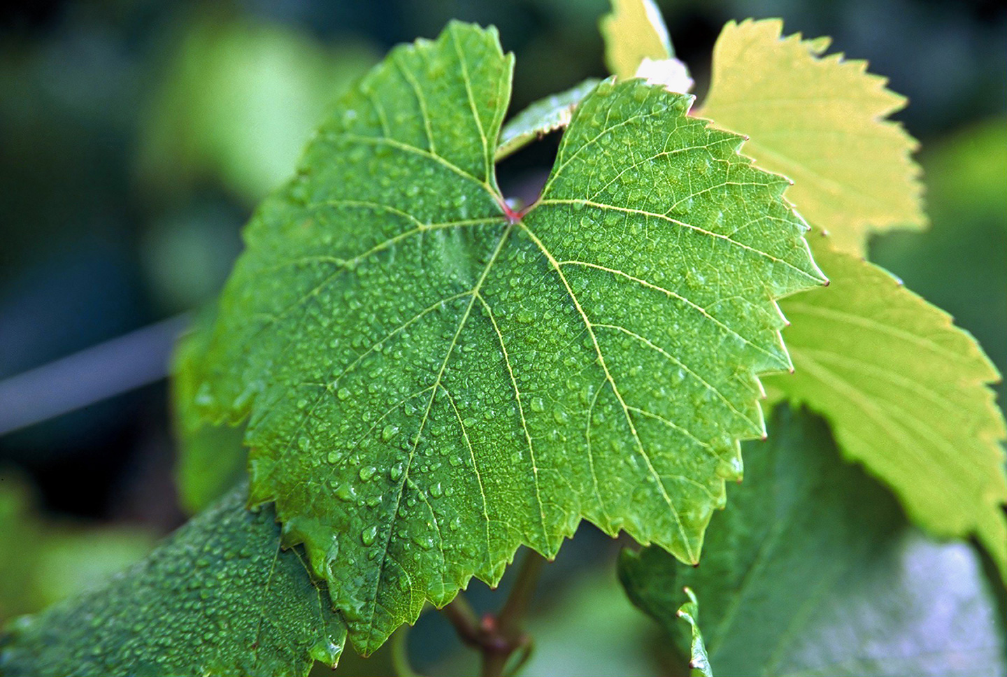 Buying-and-Selling-Grapes-with-Turrentine-web