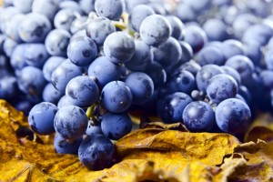 shutterstock_purplegrapes (640x427)
