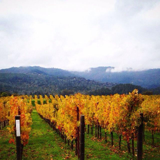 rain in vineyard